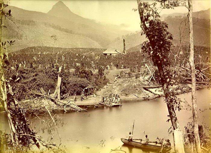clear-cut-forest-near-mount-adams-peak-sri-pada-for-tea-plantation