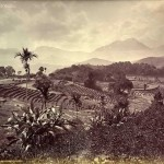 paddy-fields_-baddulla_-ceylon_-late-1800_s