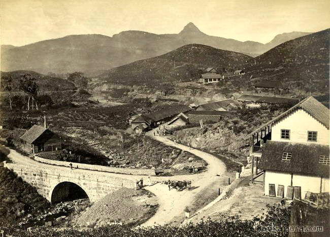 sri-pada-mountainand-brownlos-tea-plantations_early_1900