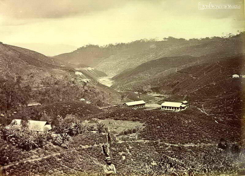 tea-plantation_-ceylon-late-1800_s