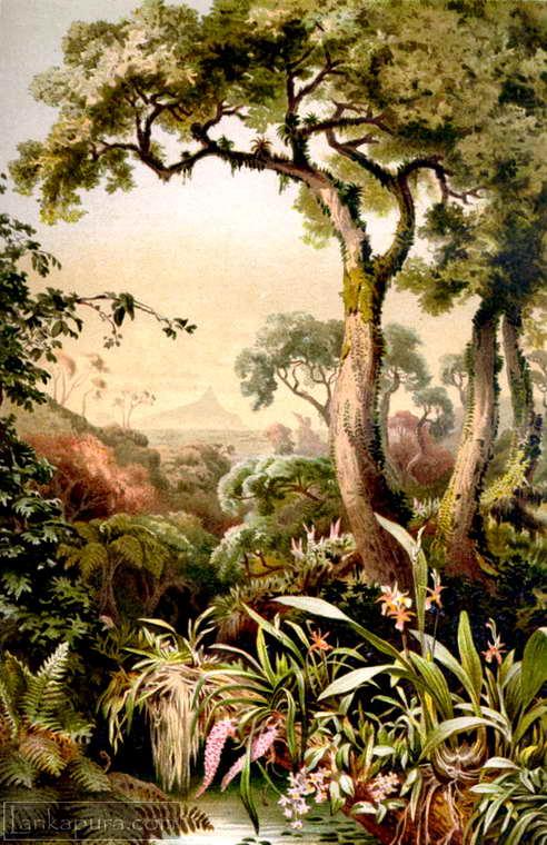 Tropical-Ceylon